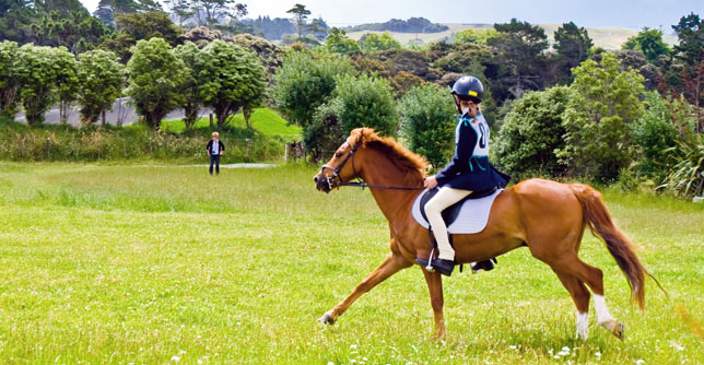 Everything you need to know about horse riding